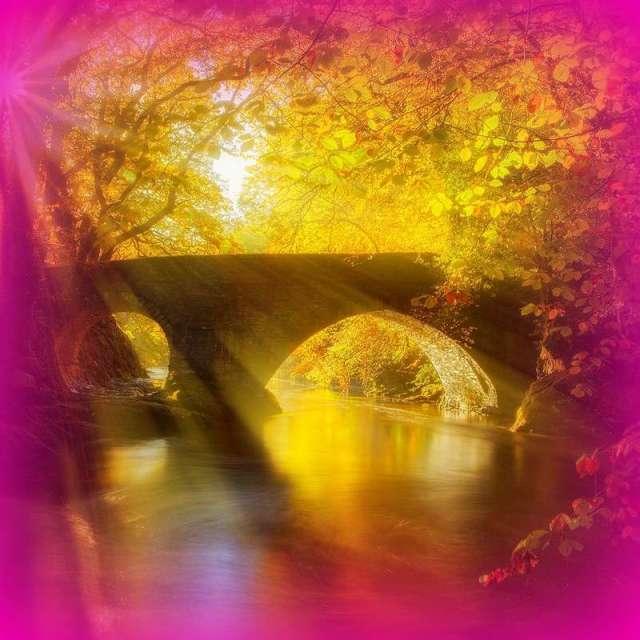 bridge-fb magenta