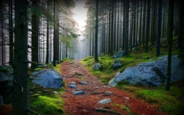 pathway-forest1_800_499