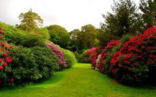 aslaanetar-rose-garden_1000_623