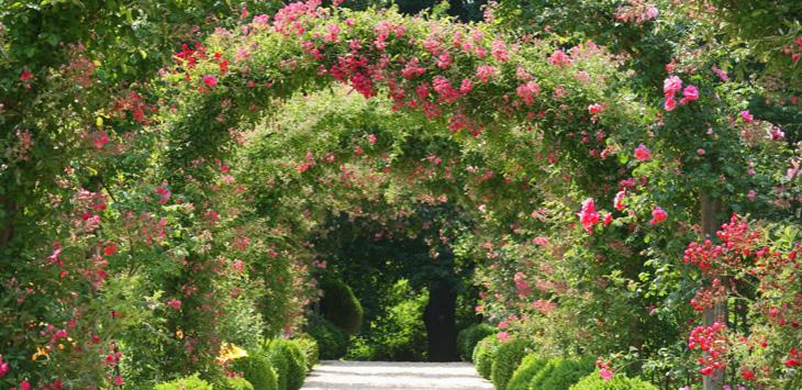 aslaanetair-rosegarden