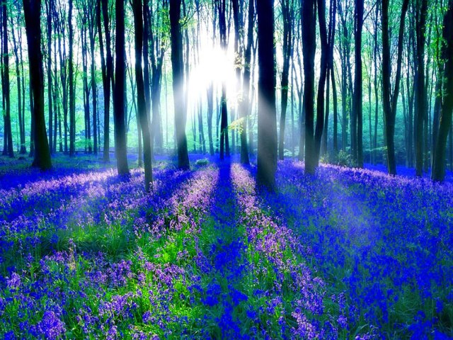 blue forest galoneiah