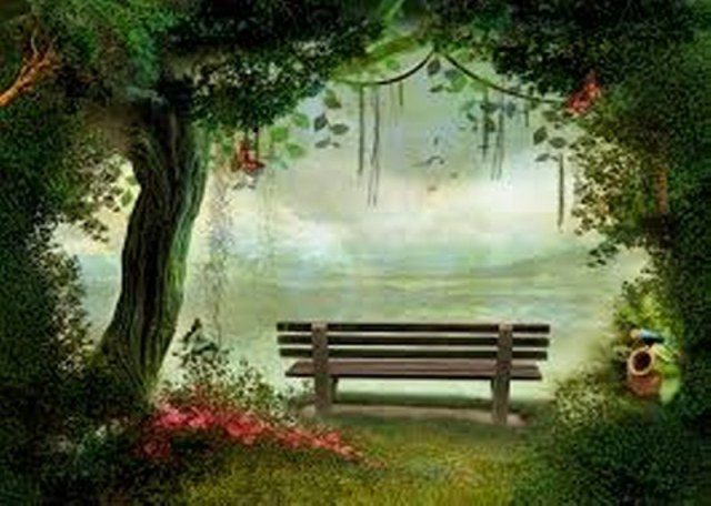 forest with bench_800_571