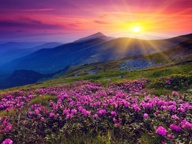 Saceleaus-Pink Flame-Step 5_800_600