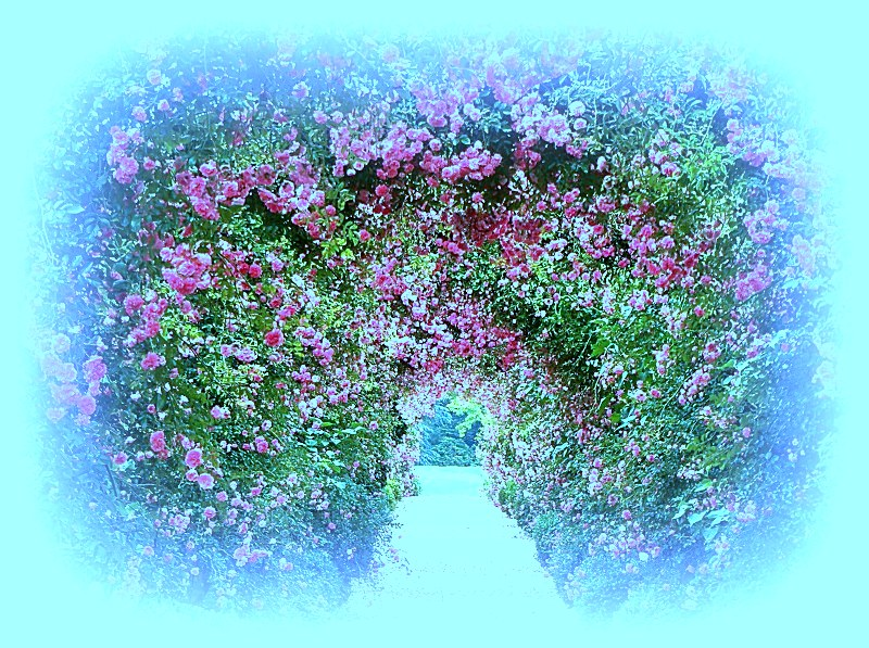 Rose Archway Path Roses Nature Flower Desktop Hd Wallpaper