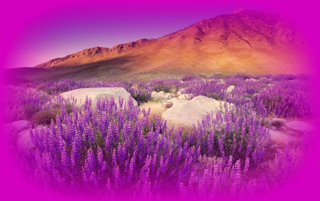 Fronlahamm purple mountains