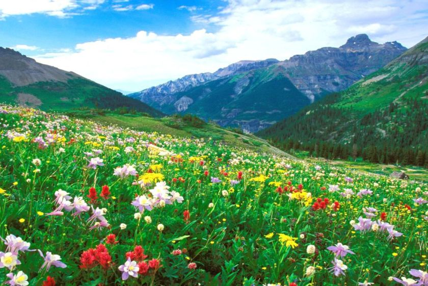 meadow mountain Shalancheiee