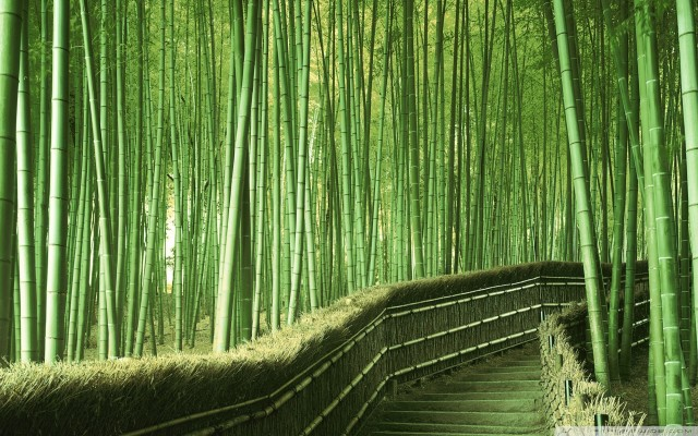Taiwan Bamboo forest
